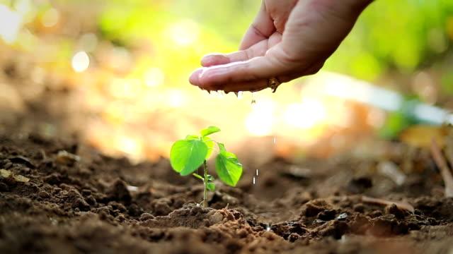 vídeos y material grabado en eventos de stock de plantar un árbol, cámara lenta - jardinería