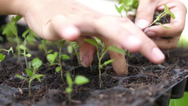 SLO MO Planting a tree