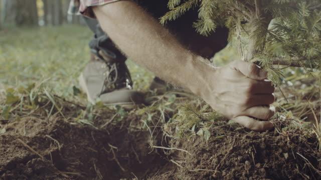 Planting a tree!