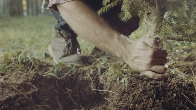 Einen Baum pflanzen! – Video