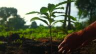 istock Planting a tree 1278497431