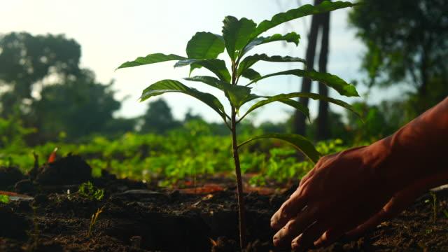 vídeos de stock, filmes e b-roll de plantando uma árvore - árvore
