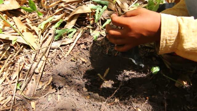 Planting a tree video