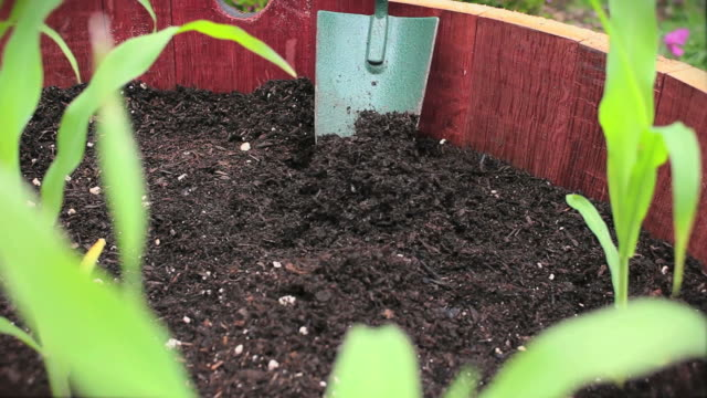 pflanzen corn v.3 (hd - urban gardening stock-videos und b-roll-filmmaterial