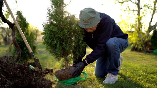 Planting evergreen tree Man planting evergreen tree planting stock videos & royalty-free footage