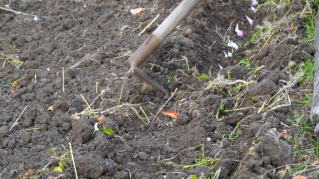 Planting garlic in garden with hoe - video