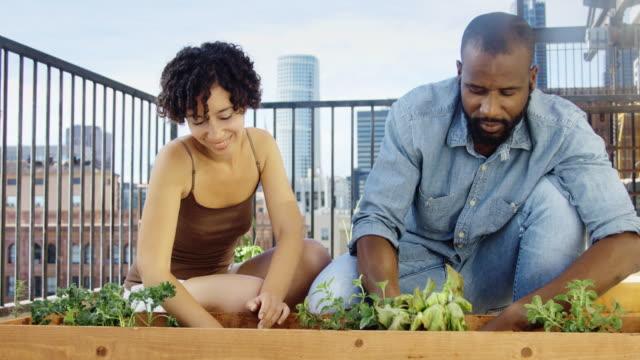 anpflanzung von kräutern auf dachgarten - handheld shot - dachgarten videos stock-videos und b-roll-filmmaterial