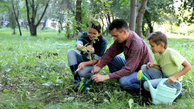 Planting of young tree Family of three planting a new tree, then looking at camera and smiling planting stock videos & royalty-free footage