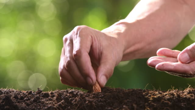 Planting seeds and watering Planting seeds and watering sowing stock videos & royalty-free footage