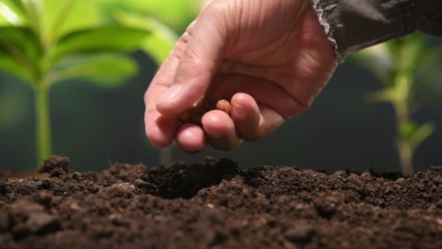 Planting seeds and watering