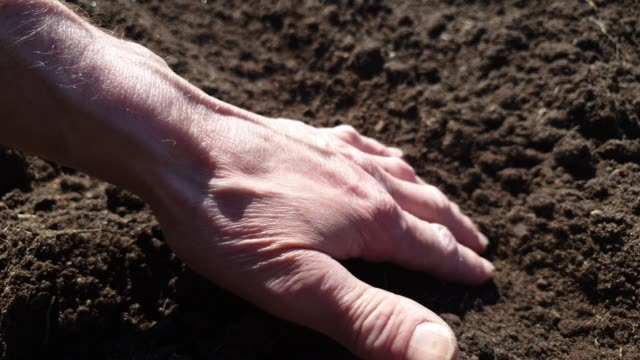Planting seeds in the ground. Planting seeds in the ground beds. Man plants the crop. Planting seeds in the ground. Planting seeds in the ground beds. Man plants the crop. cultivated land stock videos & royalty-free footage