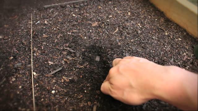 planting seeds (hd) - intoning bildbanksvideor och videomaterial från bakom kulisserna