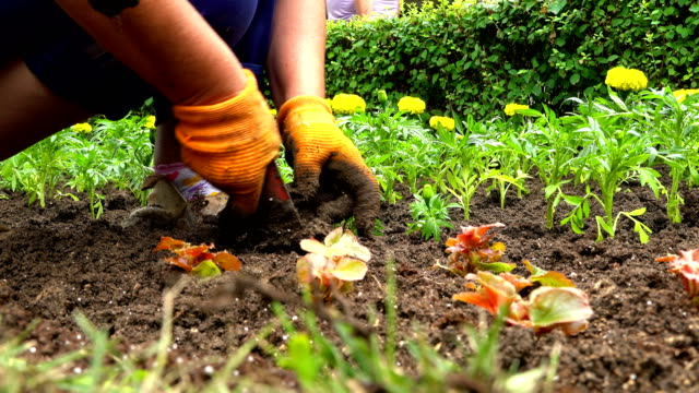 Planting spring flowers Planting spring flowers planting stock videos & royalty-free footage
