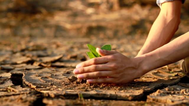 砂漠に植林木 - environmentalism点の映像素材/bロール