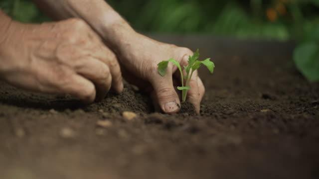 vídeos y material grabado en eventos de stock de plantación de plántulas vegetales - huerto
