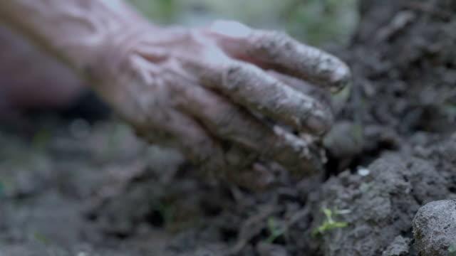 slo mo planting - pugno video stock e b–roll