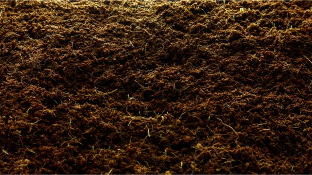 vídeos y material grabado en eventos de stock de plantación de trigo hierba crecimiento, time-lapse - hierba planta