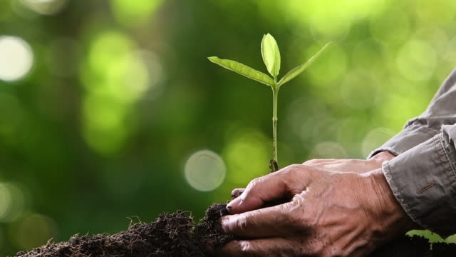Planting young tree Planting young tree planting stock videos & royalty-free footage