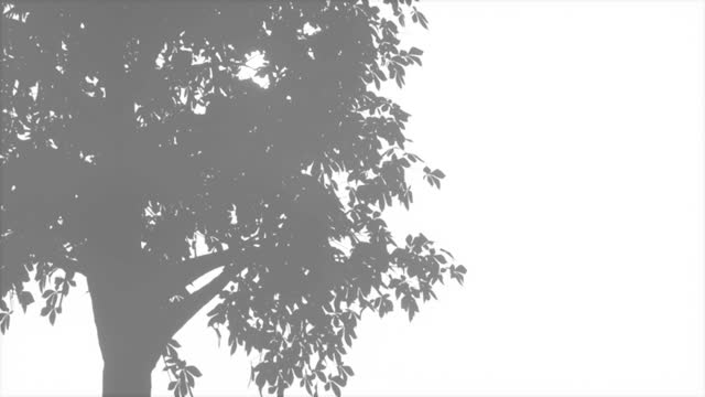 Plants and tree leaves on a white clean wall Shadow overlay effect 4k