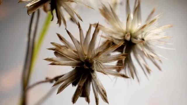 植物や野生の花 - ふわふわ点の映像素材/bロール
