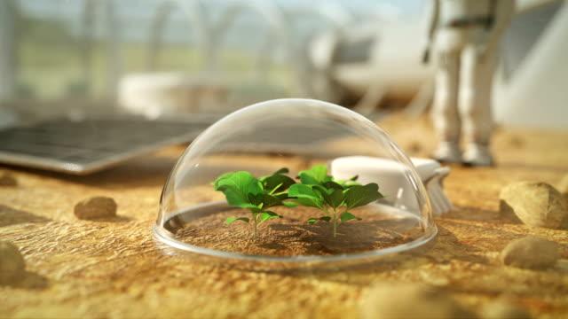 pflanzen wachsen unter mars 4k - raumanzug stock-videos und b-roll-filmmaterial