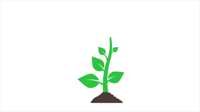plants growing animation with optional luma matte. alpha luma matte included. 4k video - plants stock videos & royalty-free footage