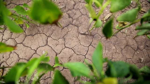Plants growing from dry cracked earth video