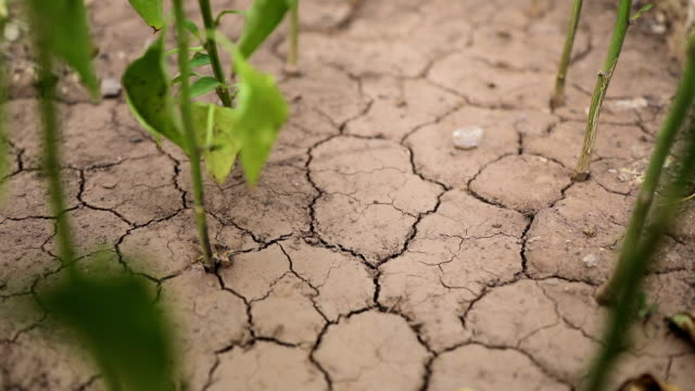 Plants growing from dry cracked earth Plants growing from dry cracked earth monoculture stock videos & royalty-free footage