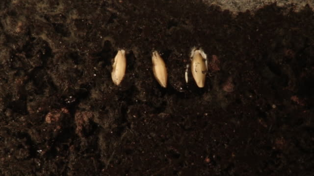 Plants Growing from seeds. video