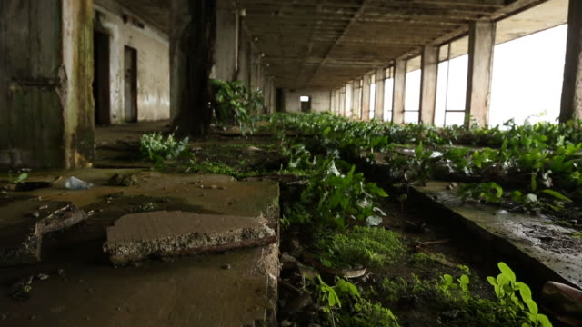 plants growing in abandoned building rise up - liberia video stock e b–roll