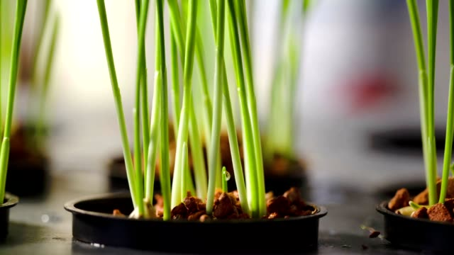 Plants in a hydroponic setting Plants in a hydroponic setting hydroponics stock videos & royalty-free footage