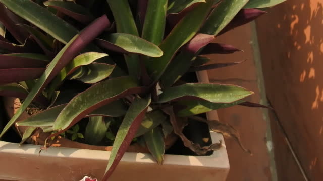 Plants in pots video