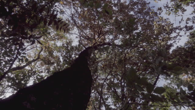 Plants moved by the wind into a forest video