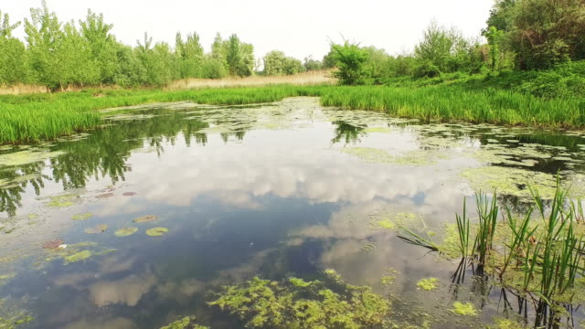 AERIAL Plants of a freshwater wetland video