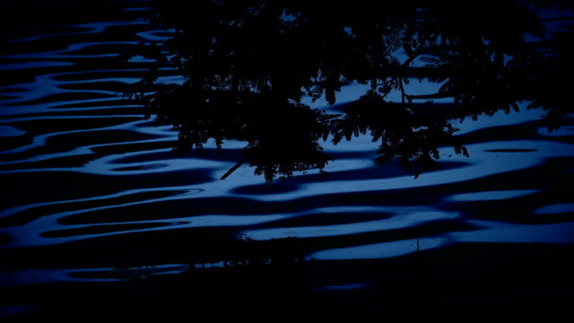 Plants Reflect In Lake At Night video
