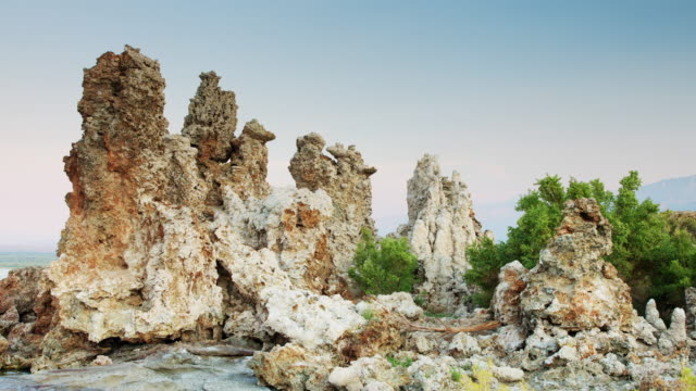 Plants Rooted in Travertine Swaying in Evening Breeze at Mono Lake video