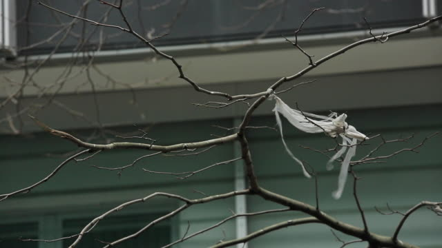 Plastic Bag Dangling from Bare Tree Branch