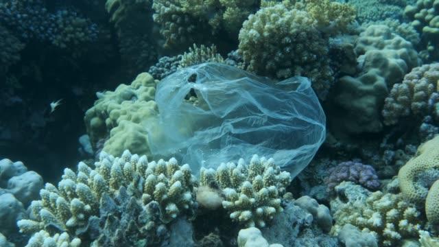 stockvideo's en b-roll-footage met plastic zak drijven in de buurt van prachtige koraalrif, vastkluiven aan hem wordt opgepikt door de golf en drijft verder, school van tropische vissen zwemt op achtergrond blauw water. kunststof vervuiling. 4k/50fps - ocean under water