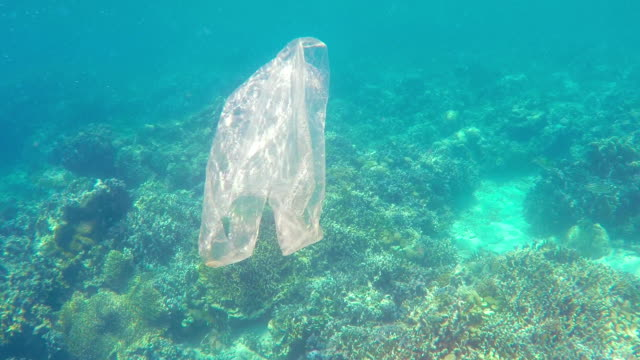 Plastic bag floating in North Bali coral reef video