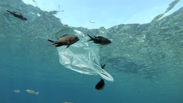 пластиковый мешок, плавающий в море - загрязнение окружающей среды стоковые видео и кадры b-roll
