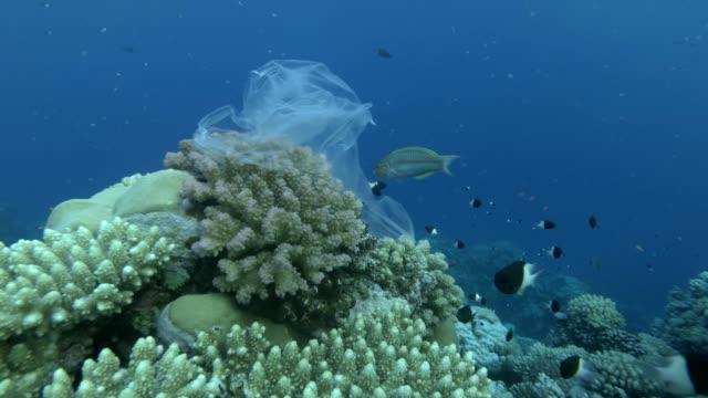 plastiktüte hängt auf schönen korallenriff und swies in den wellen, eine schule von tropischen fischen schwimmt in der nähe, auf hintergrund blaues wasser. unterwasser-kunststoffverschmutzung der ozeane. - riff stock-videos und b-roll-filmmaterial