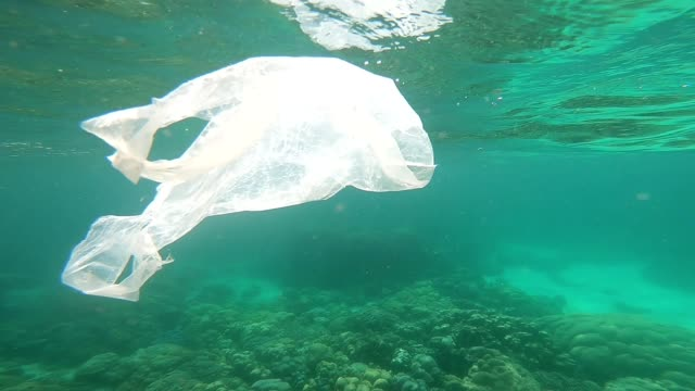 Plastic bags floating underwater over fragile coral reef video