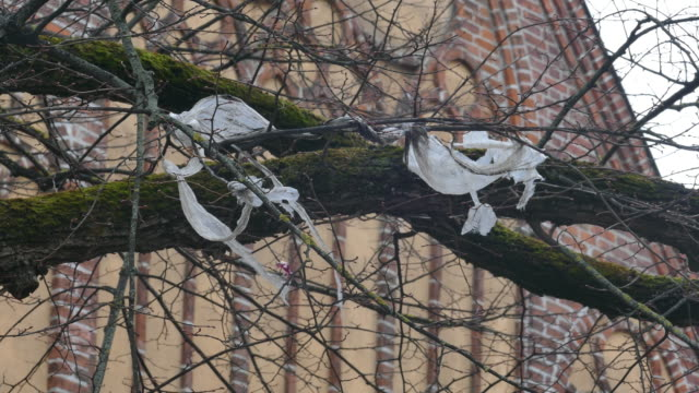 Plastic foil pollution in tree branches