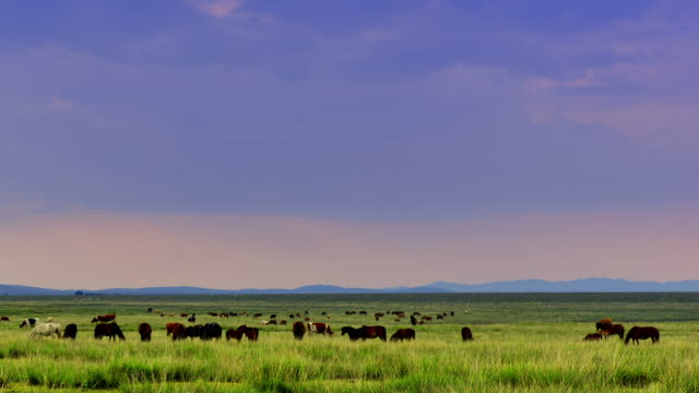 4K: Plateau Pasture at Sunset, Time Lapse - Panning video