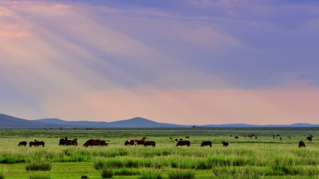 4K: Plateau Pasture at Sunset, Time Lapse video