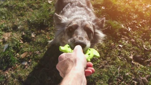 vídeos y material grabado en eventos de stock de jugar con perro - training