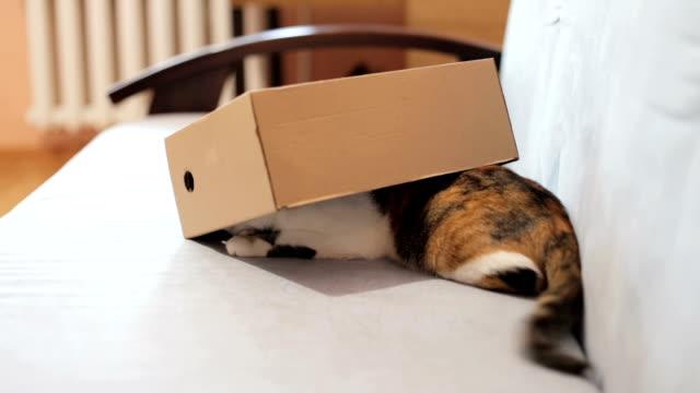 lekfull katt i en låda av kartong - djurhår bildbanksvideor och videomaterial från bakom kulisserna