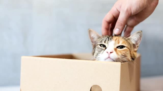 playful cat in a box of cardboard - kociak filmów i materiałów b-roll