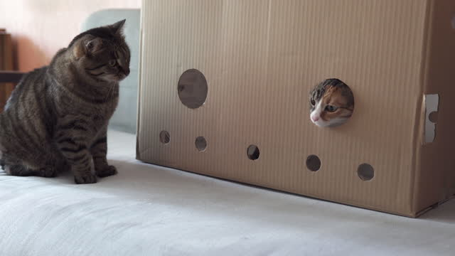 Playful cat sitting in a cardboard box video