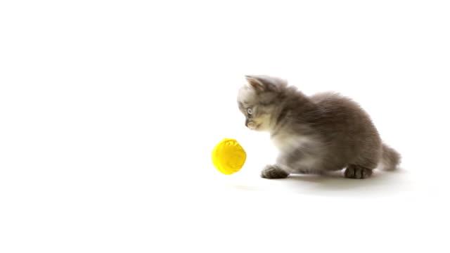 stockvideo's en b-roll-footage met playful cat - kitten